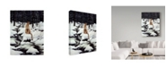 "Trademark Global Jeff Tift 'Cougar' Canvas Art - 24"" x 32"""
