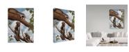 "Trademark Global Rusty Frentner 'Ringtail Reveille' Canvas Art - 35"" x 47"""