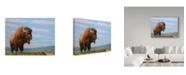 "Trademark Global James W. Johnson 'American Bison' Canvas Art - 47"" x 35"""