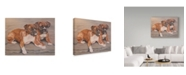 """Trademark Global Janet Pidoux 'Two Boxer Dogs' Canvas Art - 47"""" x 35"""""""