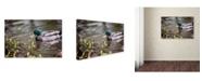 """Trademark Global Jason Shaffer 'Mallard' Canvas Art - 24"""" x 16"""""""