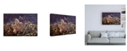 "Trademark Global R W Hedge Heavens Light Canvas Art - 27"" x 33.5"""