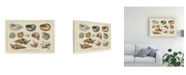 "Trademark Global Wild Apple Portfolio Shell Etchings I Canvas Art - 37"" x 49"""
