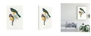 "Trademark Global John Gould Tropical Trogons II Canvas Art - 27"" x 33.5"""