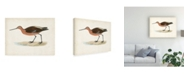 "Trademark Global Morris Morris Sandpiper II Canvas Art - 15.5"" x 21"""