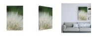 "Trademark Global Renee W. Stramel Macro Dandelion I Canvas Art - 27"" x 33.5"""
