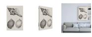 "Trademark Global Vision Studio Charcoal & Linen Shells V Canvas Art - 27"" x 33.5"""