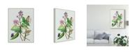 "Trademark Global Melissa Wang Metaplexis Japonica II Canvas Art - 37"" x 49"""
