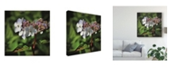 "Trademark Global Christine Sainte-Laudy White Delicacy Canvas Art - 15"" x 20"""