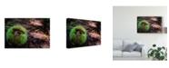 """Trademark Global Pixie Pics Grass Ball Canvas Art - 15"""" x 20"""""""