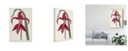 """Trademark Global Curtis Curtis Garden Beauties I Canvas Art - 37"""" x 49"""""""