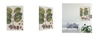 "Trademark Global Vision Studio Exotic Botanique II Canvas Art - 20"" x 25"""