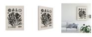"Trademark Global Vision Studio Coral Specimen IV Canvas Art - 20"" x 25"""