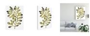 "Trademark Global June Erica Vess Foliage Fossil II Canvas Art - 20"" x 25"""