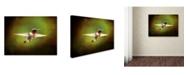 "Trademark Global Jai Johnson 'Portrait Of A Hummingbird In Flight' Canvas Art - 47"" x 35"" x 2"""