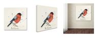 "Trademark Global Michelle Campbell 'Bull Finch' Canvas Art - 14"" x 14"" x 2"""