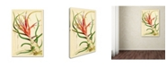 "Trademark Global Vintage Lavoie 'Tillandsia Bulbosa 1847' Canvas Art - 19"" x 12"" x 2"""