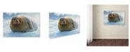 "Trademark Global Robert Harding Picture Library 'Seals 1' Canvas Art - 47"" x 30"" x 2"""