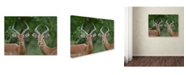 "Trademark Global Robert Harding Picture Library 'Animals 103' Canvas Art - 32"" x 24"" x 2"""