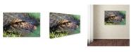 "Trademark Global Robert Harding Picture Library 'Alligators 2' Canvas Art - 19"" x 12"" x 2"""