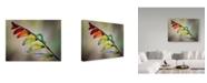 "Trademark Global Jimmy Hoffman 'Oruga' Canvas Art - 19"" x 2"" x 14"""