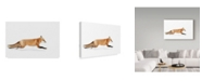 "Trademark Global Jim Cumming 'Red Fox In Algonquin Park' Canvas Art - 32"" x 2"" x 22"""