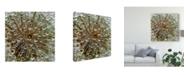 "Trademark Global Tanya Markova 'Droplets On Dandelion' Canvas Art - 24"" x 2"" x 24"""