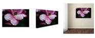 "Trademark Global PIPA Fine Art 'Raindrops on Wild Rose Color' Canvas Art - 16"" x 24"""