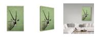 "Trademark Global James W. Johnson 'Gemsbok' Canvas Art - 22"" x 32"""