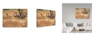 "Trademark Global J.D. Mcfarlan 'Ears' Canvas Art - 19"" x 14"""