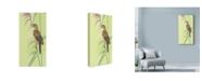 "Trademark Global Mike Hughes 'Singing Sedge Warbler' Canvas Art - 10"" x 19"""
