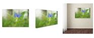 "Trademark Global PIPA Fine Art 'Asiatic Dayflower' Canvas Art - 30"" x 47"""