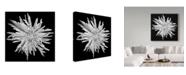 "Trademark Global Susan S. Barmon 'Chrysanthemum 1 Black And White' Canvas Art - 14"" x 14"""