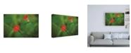 """Trademark Global Kurt Shaffer Photographs Red Green in Nature Canvas Art - 36.5"""" x 48"""""""