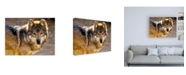 "Trademark Global Mitch Catanzaro Lobo Wolf Canvas Art - 15.5"" x 21"""