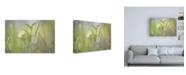 "Trademark Global Ulpi Gonzale Morning Light No. 1 Canvas Art - 19.5"" x 26"""