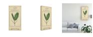 "Trademark Global Vision Studio Linnaean Botany IV Canvas Art - 20"" x 25"""