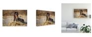 "Trademark Global Vedran Vidak Horse in Water Canvas Art - 15"" x 20"""