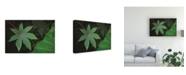"Trademark Global Kurt Shaffer Contrast in Leaves Canvas Art - 37"" x 49"""