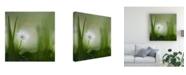"Trademark Global Piet Haaksma Alone Flowers Canvas Art - 15"" x 20"""