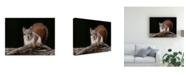 "Trademark Global Michael Budden On the Move Canvas Art - 20"" x 25"""