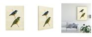 "Trademark Global Cassin Peruvian Tanager I Canvas Art - 37"" x 49"""