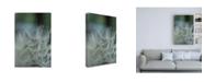 "Trademark Global Renee W. Stramel Macro Dandelion VIII Canvas Art - 19.5"" x 26"""