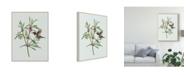 "Trademark Global Melissa Wang Leonurus Japonicus I Canvas Art - 37"" x 49"""