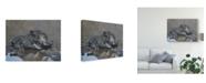 "Trademark Global Pip Mcgarry Hog in Heaven 2012 Canvas Art - 20"" x 25"""