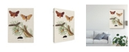 "Trademark Global Johann Esper Life Cycle of a Moth II Canvas Art - 20"" x 25"""