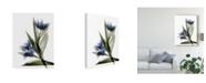 "Trademark Global Judy Stalus Xray Tulip VI Canvas Art - 37"" x 49"""