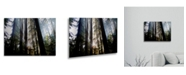 "Trademark Global Pierre Leclerc Sunrays Floating Brushed Aluminum Art - 22"" x 25"""