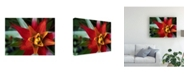 "Trademark Global Jason Johnson Bromeliad Burst I Canvas Art - 20"" x 25"""