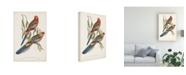 "Trademark Global John Gould Tropical Parrots II Canvas Art - 15"" x 20"""